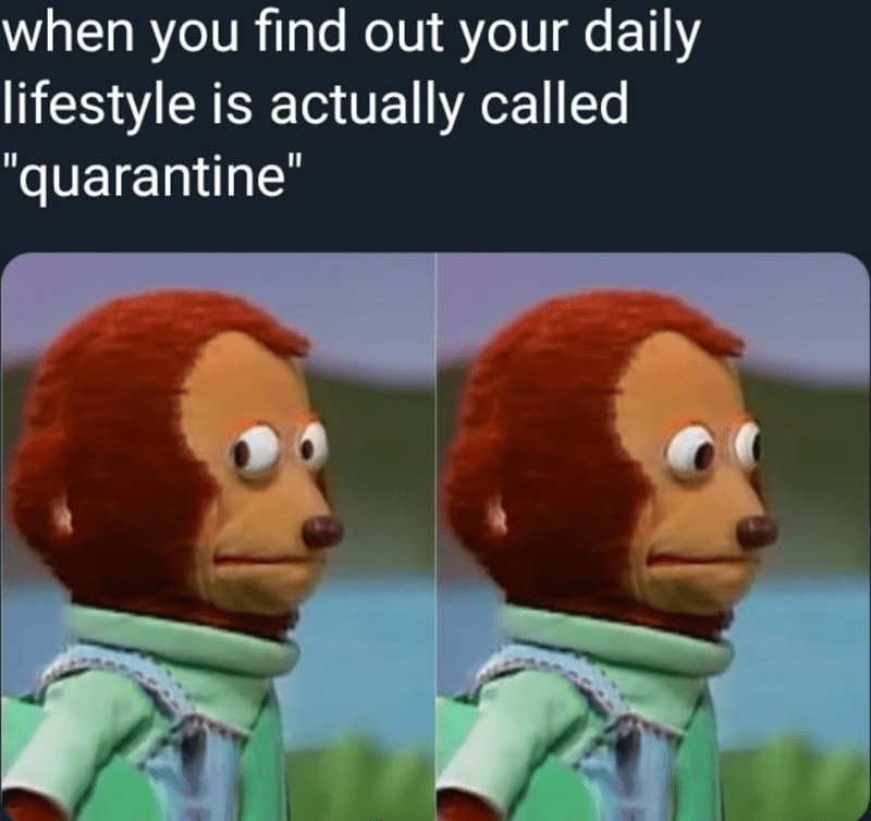 daily-lifestyle-is-actually-called-quarantine-above-images-of-the-nervous-monkey-looking-around.png